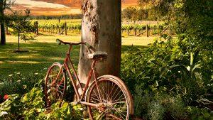 Broke Fordwich Wine Region, Hunter Valley Wine Country