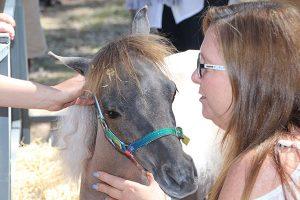 Broke Village Fair Petting Zoo