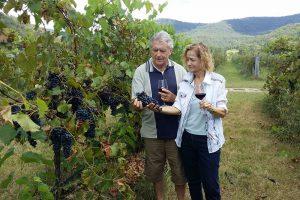 Ascella Winery, Broke Fordwich