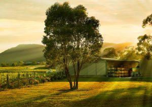 Broke Fordwich, Hunter Valley wineries