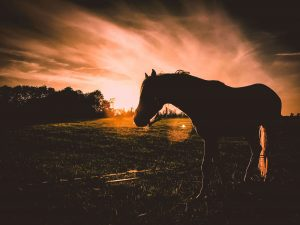 Photo of horse at dusk